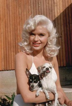 Jayne Mansfield picture
