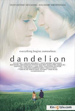 Dandelion - pictures.