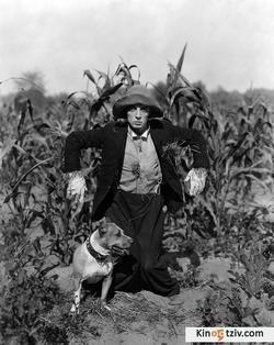 The Scarecrow picture