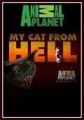 My Cat from Hell pictures.
