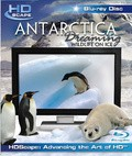 Antarctica Dreaming - WildLife On Ice - wallpapers.