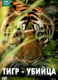 BBC: Natural World - Tiger Kill pictures.