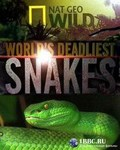 N.G: World's deadliest snakes - wallpapers.