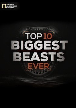 Top-10 Biggest Beasts Ever - wallpapers.